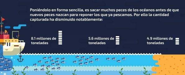 Barco | Conservación de Especies Marinas | Aquarium Cancún