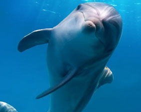 Delfín nadando | Aquarium Cancún