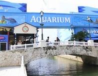 Aquarium canc n precios del acuario de canc n for Precio entrada aquarium