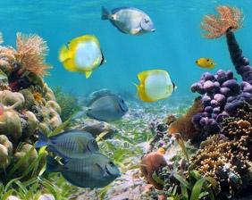 Niños alimentando peces - Aquarium Cancún