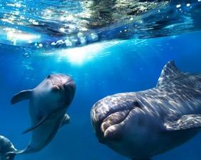 Personas acariciando delfín - Aquarium Cancún