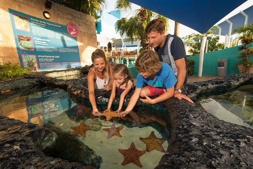 interact with Sea Stars  Touching Area   Aquarium Cancún