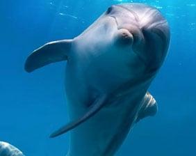 Dolphin Swimming   Aquarium Cancún
