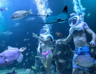 aquarium-cancun-sea-trek-tickets.jpg