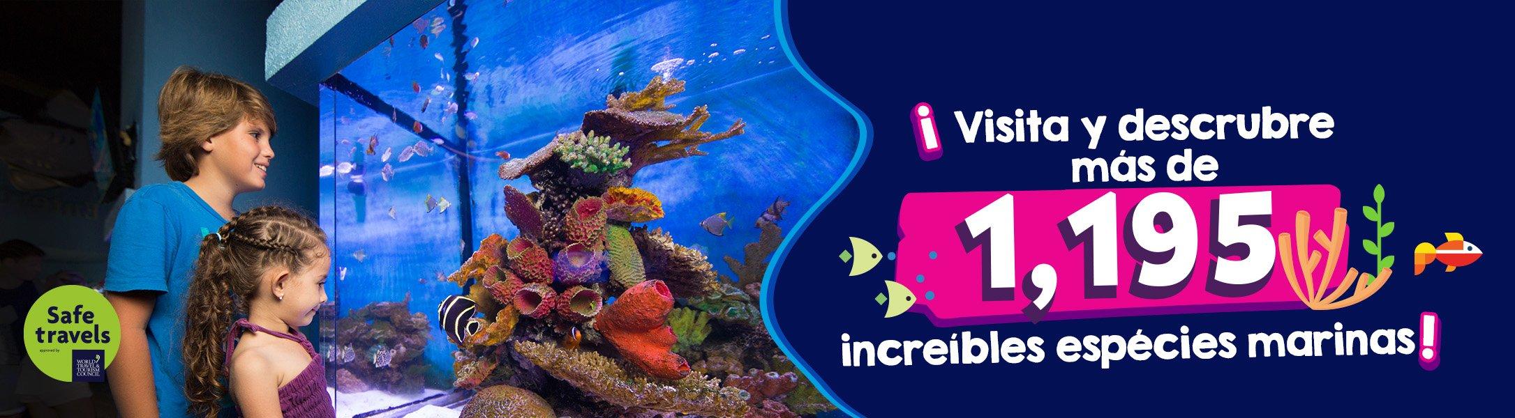 Acuario interactivo de Cancun Interactive aquarium Cancun